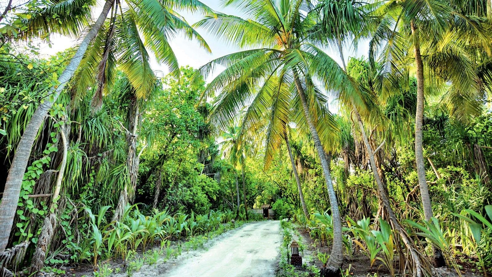 Мальдивы, отель Hideaway Beach Resort & Spa, внутри острова