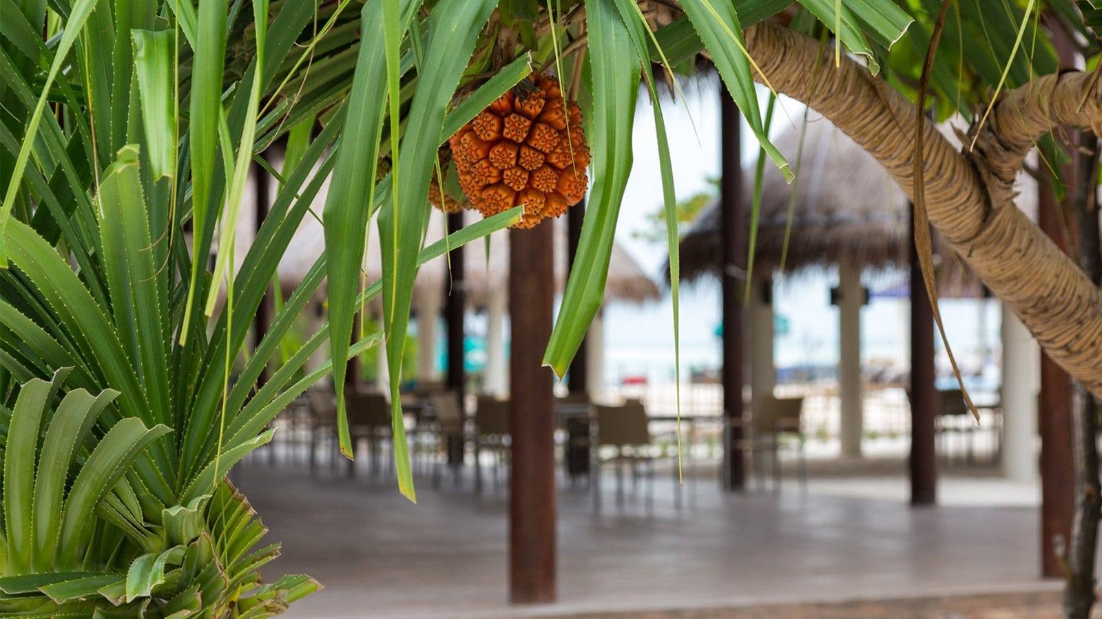 Мальдивы, отель Cocoon Maldives, ресторан Octopus