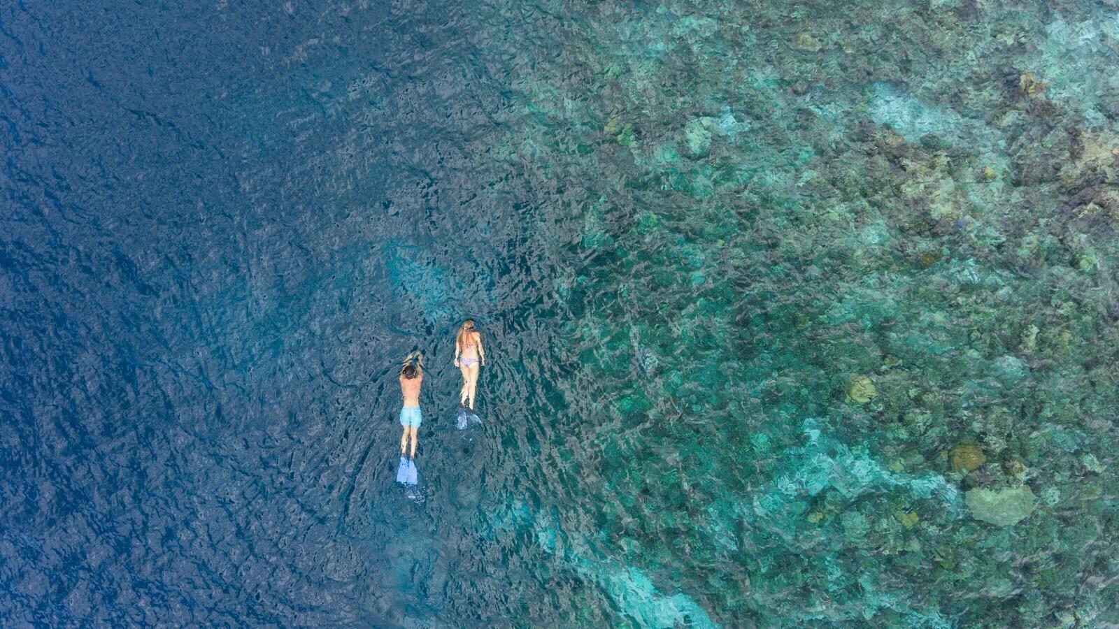 Мальдивы, отель Baros Maldives, домашний риф