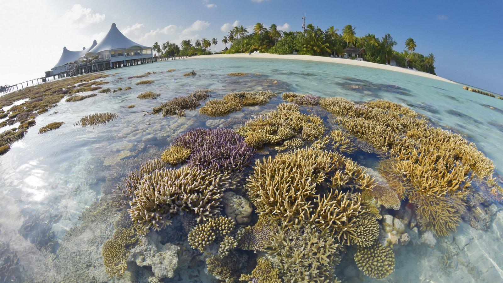 Мальдивы, отель Safari Island Resort & Spa, домашний риф