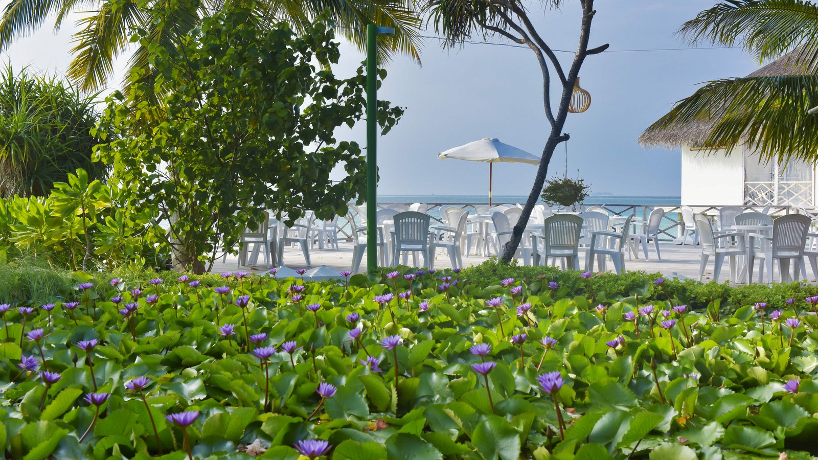Мальдивы, отель Safari Island Resort & Spa, Sundown Bar